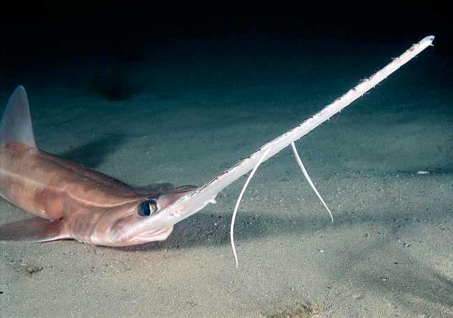 AREA FISH  FISHAO Wiki